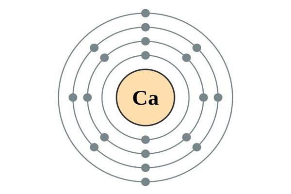 Ciclo de cálcio: características, etapas e importância