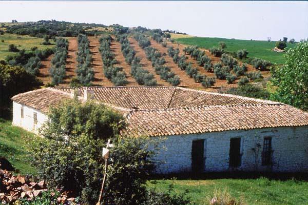 Ecossistema rural: características, componentes, flora e fauna 10