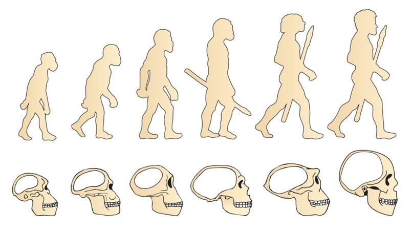 Teorias evolucionárias: Aristóteles, Leclerc, Lamarck, Wallace e Darwin