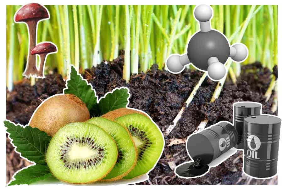 A importância dos compostos orgânicos: 7 razões