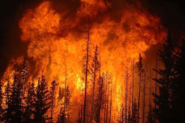 Incêndios florestais: características, causas, conseqüências, tipos