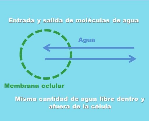 Solução isotônica: componentes, preparação, exemplos 1
