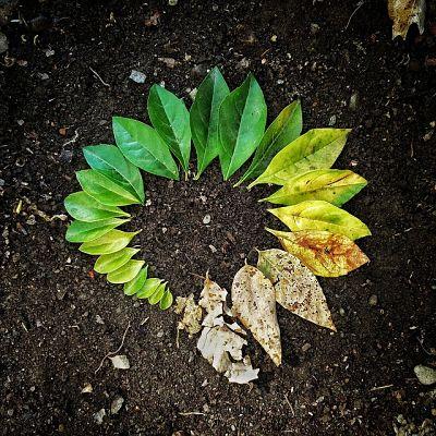 Ciclo de vida das plantas: estágios e suas características