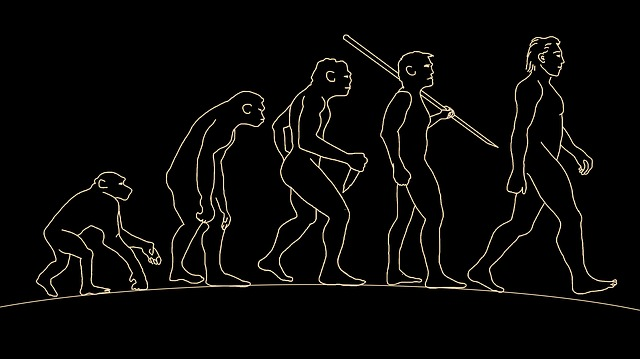 Processo de hominização: características e fases