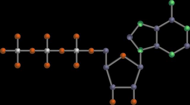 Glicólise: funções, enzimas, fases, produtos, importância 8