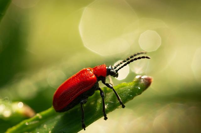 Invertebrados: características, classificação, exemplos, sistemas