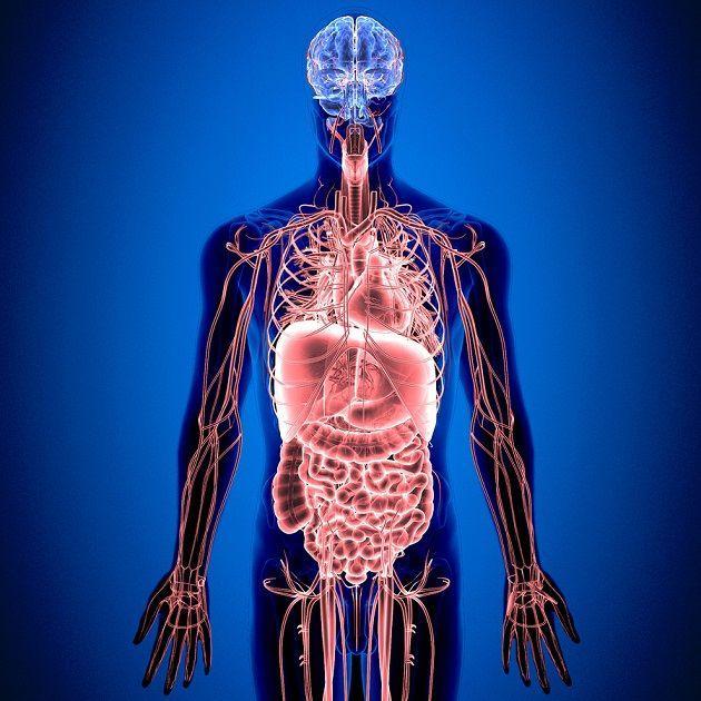 Sistema nervoso entérico: características, partes, funções