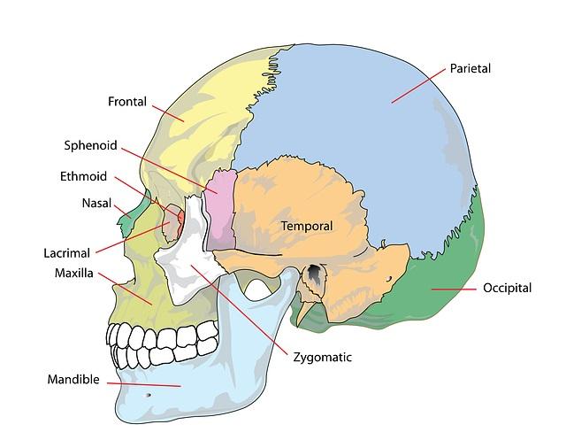Pontos craniométricos: localização e diâmetros do crânio 4