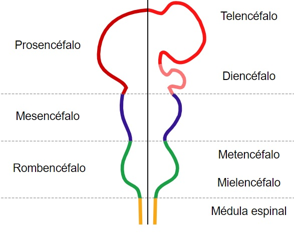 Enjoo (tontura): sintomas, causas e tratamentos 7